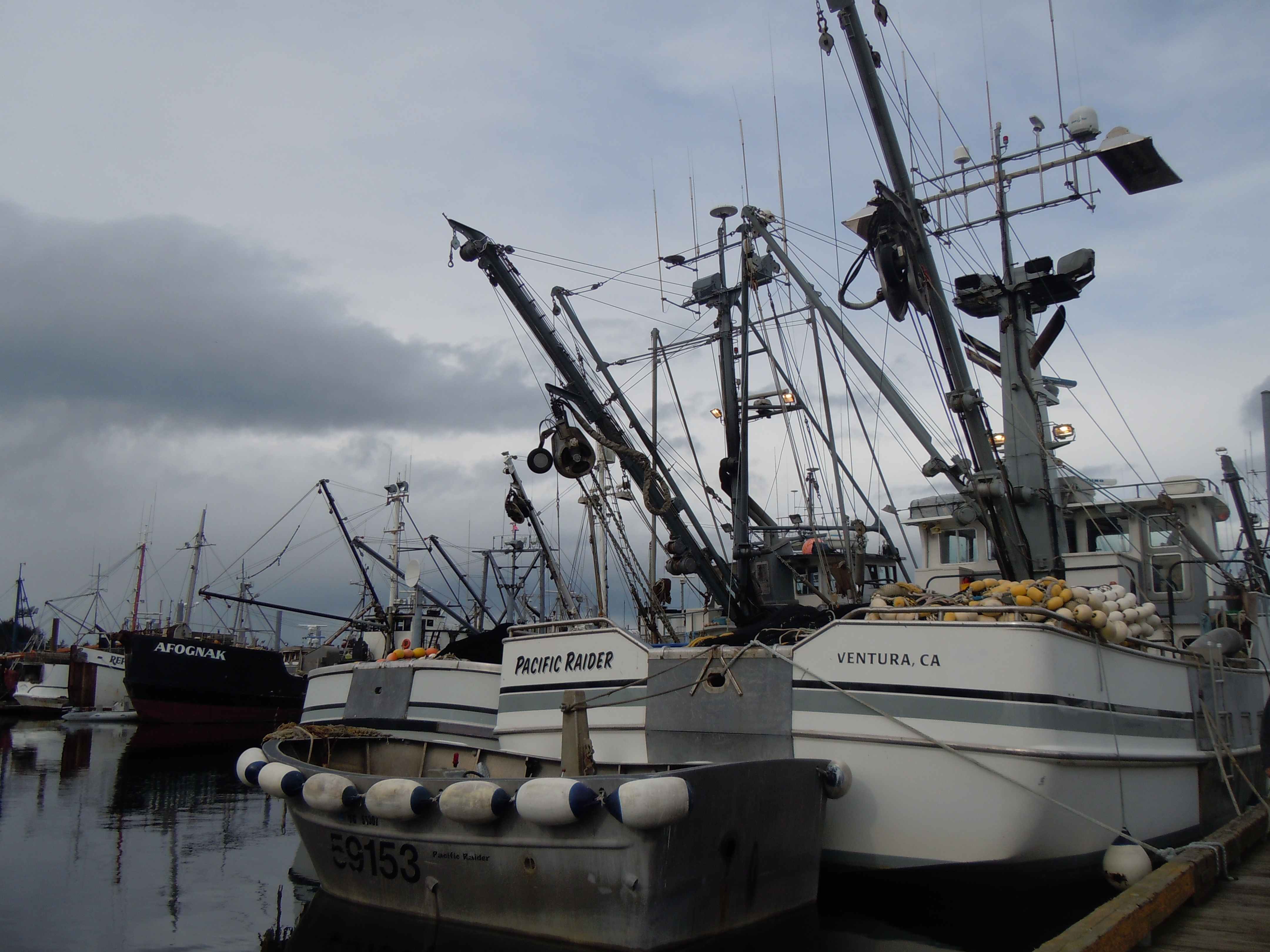 Contemplating the Harvest: Sitka's Herring Fishery — Hooked