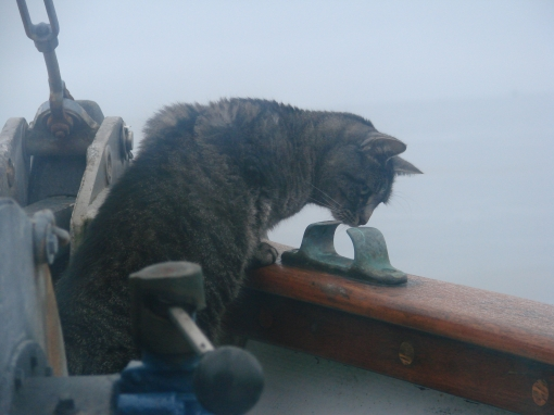 Bear Peers Over the Anchor