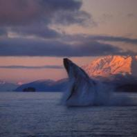 Lynn Schooler, Solstice Whale Dance